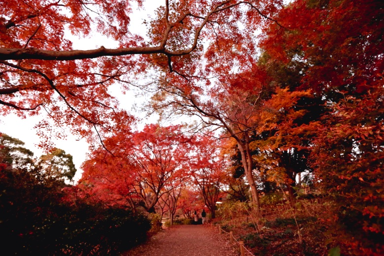 昭和記念公園の写真